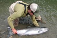 Chad Black Chinook King Salmon